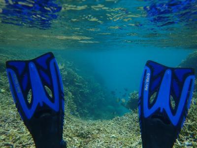 シギラリゾート 海の世界は出会いがいっぱい でも一年で変わっている景色もある