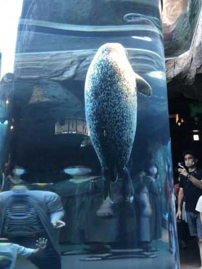 旭山動物園と旭岳登山