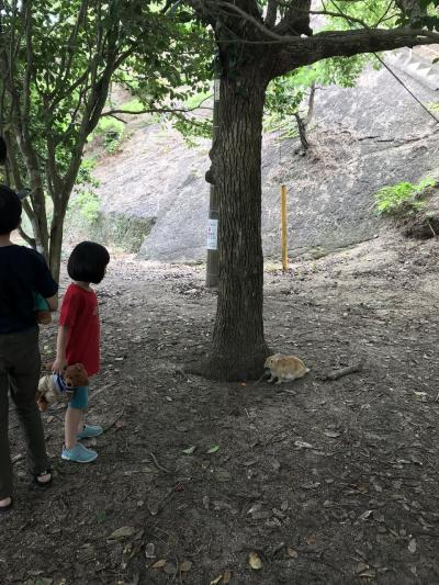 大久野島 子連れ旅行 10歳 5歳