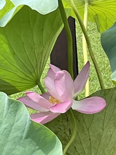 花を探して 千葉公園