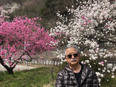 【信州の春】高遠の桜 昼神の花桃