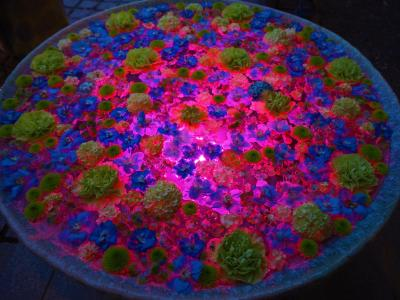 【花手水巡り】6月の行田花手水Weekのライトアップを観賞してきました