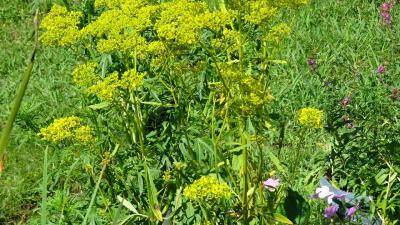 久しぶりに、西武庫公園の分区園に咲く花を見に行きました その4。