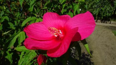 久しぶりに、西武庫公園の分区園に咲く花を見に行きました その5。