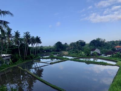 バリ島の美しい風景