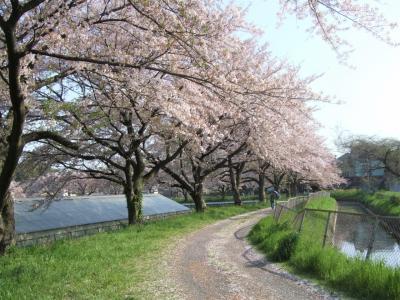 『見沼田んぼ②』見沼代用水・見沼通船堀と桜回廊