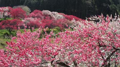 2021年4月 長野県阿智村「花桃の里」と遠州森町「小國神社」へ!道の駅スタンプ巡りも兼て!1日目