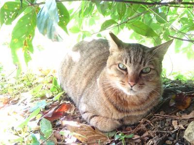 2020年10月 哲学の道で猫まみれアゲイン (名古屋・高山・京都巡り旅 その十八)