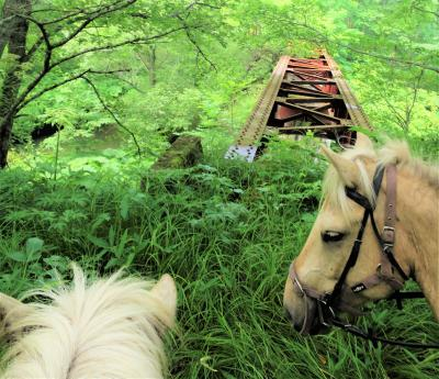 シマウマ駆ける コロボックルの森【知床8日間 CREWG旅-4《乗馬編》】