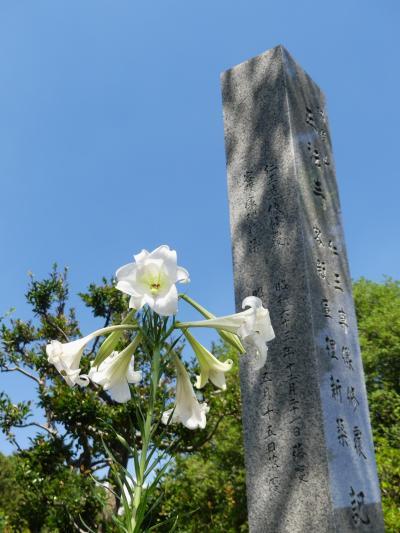 「正法寺」のユリ_2021_ヒガンバナは気配なし、終盤のユリが咲いてました(群馬県・太田市)