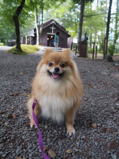 長野/待ち人きたる。愛犬やこちゃんと一緒に週末逃暑の軽井沢@ルシアン旧軽井沢(2021年8月)