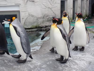 北海道ツーリング 25日目 旭川へ移動、旭山動物園へ行きました。