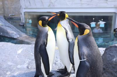 旭山動物園ペンギン&アザラシ他