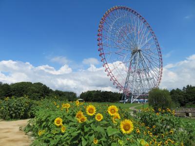 葛西臨海公園でお花を満喫♪~2021~