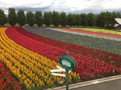 気分を変えてちょっとお散歩~富良野の花畑(ほぼ花畑だけの写真です)