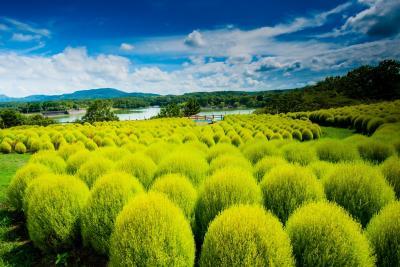 農業公園のグリーンコキア 2021