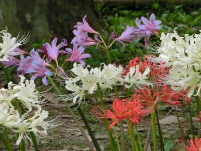 大阪万博記念公園 自然文化園~日本庭園で花を見て、「ヴィータ(VITA)OB会」に参加して、ささやかで、幸せなひと時を過ごす。(2021)