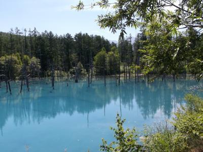 北海道の旅8日間 ⑥ ドライブでまわる美瑛 青い池とパッチワークの丘