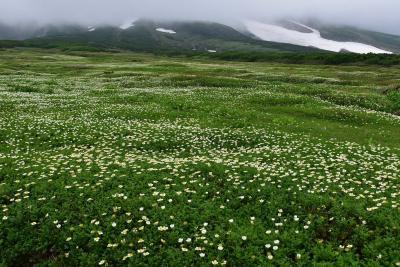 旭岳裾合平と勇駒荘まで2021夏~チングルマのお花畑~(北海道)