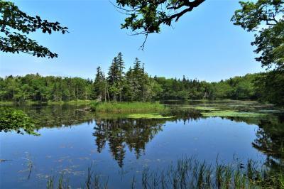 ヒグマの森へ -ネイチャー・ガイドと歩く、王道で楽しむ世界自然遺産【知床8日間 CREWG旅-5《知床五湖ハイキング編》】
