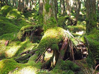 長野旅行2021〈1〉白駒の池&苔の森、蓼科湖、美ヶ原高原