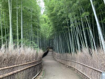 京都さんぽ 嵐山 竹林の小径~大河内伝次郎の大河内山荘、自然を満喫♪