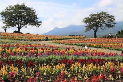 のんびり那須3泊3日レッサーパンダ遠征(8)那須フラワーワールド~色とりどりなケイトウ花畑を見たくて~青空と山とカラフルカーペットの競演