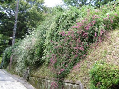 長寿寺の萩の花