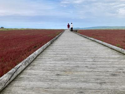 思ったほどは赤くない「レッドカーペット」~花の名前はサンゴ草~特急オホーツクでGO!