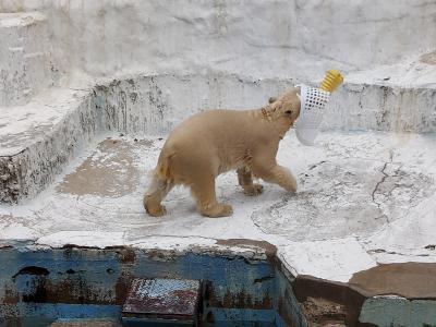 ディスカバリーご近所 お彼岸のお参りついでに、天王寺動物園のホウちゃん見に。めっちゃ可愛いからみんな見て!