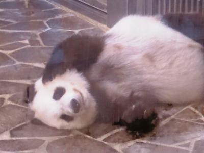 タンタンさん、26歳のお誕生日おめでとう!王子動物園で撮った写真を振り返ってみた♪