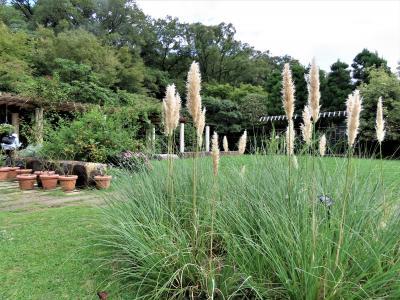初秋の西宮市・北山緑化植物園の花々を鑑賞します!