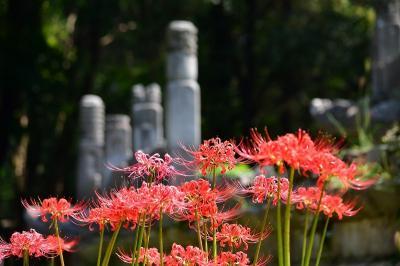 復活したコロナ厳戒態勢下で世界遺産の明孝陵観光をしていて動植物も撮影
