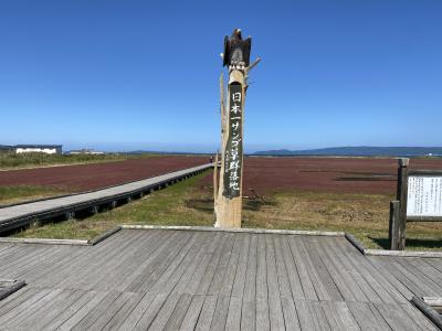 卯原内サンゴ草群生地の紅葉と知床五湖高架木道 <道東day1>