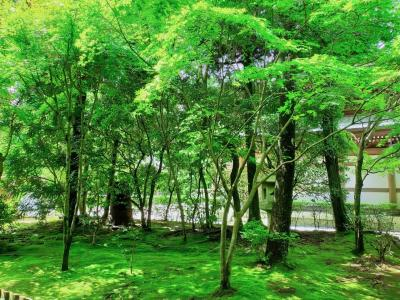 京都2泊3日 龍安寺と嵯峨野トロッコと市内パン屋巡り