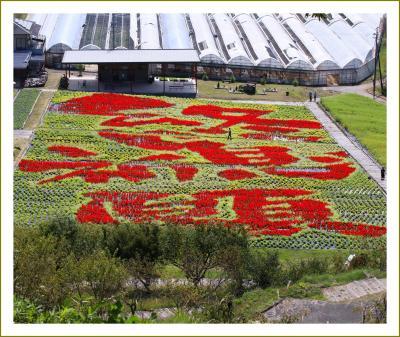 Solitary Journey[2073]サルビアの花で描かれた壮大な絵文字「コロナ終息祈願」<秋の花景色を満喫♪花の駅せら>広島県世羅町