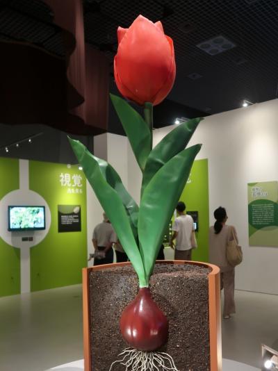 上野-9 科博/植物-1 「植物という生き方」☆視覚・触覚・コミュニケーション能力も実感