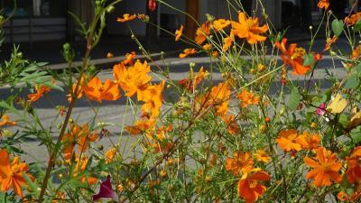 西武庫公園の分区園に咲くお花を見せてもらいに行きました その01。