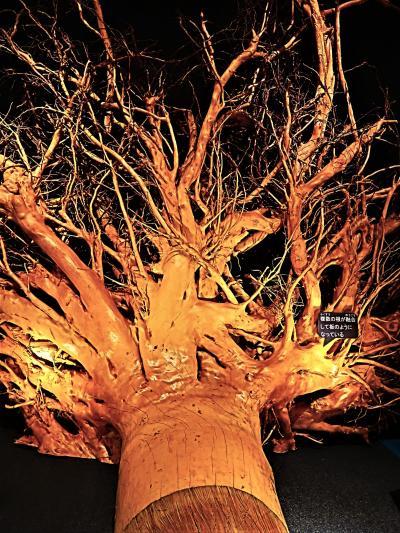 上野12 科博/植物-4 「植物の形と成長」 ☆根の魅力・遺伝子組換え‐青いバラ/キクも