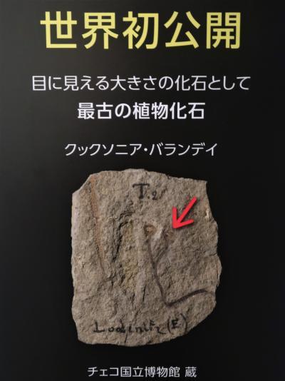 上野13 科博/植物-5 「植物はどのように進化してきたか?」☆森の誕生・最古の植物化石