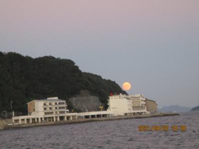 豊浜釣り桟橋9と10月 昼はアイゴ夜はゴンズイ