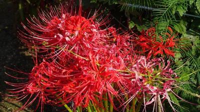 西武庫公園の分区園に咲くお花を見せてもらいに行きました その06。