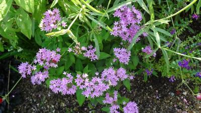 西武庫公園の分区園に咲くお花を見せてもらいに行きました その07。