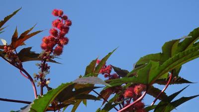 西武庫公園の分区園に咲くお花を見せてもらいに行きました その09。