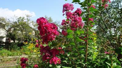 西武庫公園の分区園に咲くお花を見せてもらいに行きました その12。