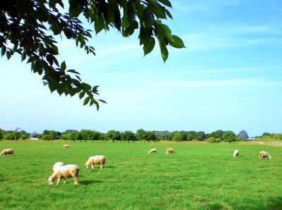 夏のガーデン巡り♪えこりん村☆銀河庭園+みどりの牧場+らくだ軒☆羊を眺めながランチ