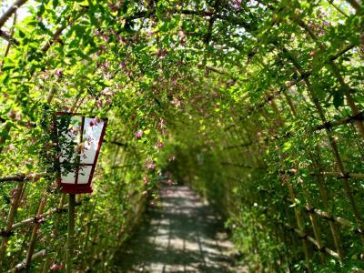満開の萩トンネルと秋の花 下町商店街にニューウェーブ!