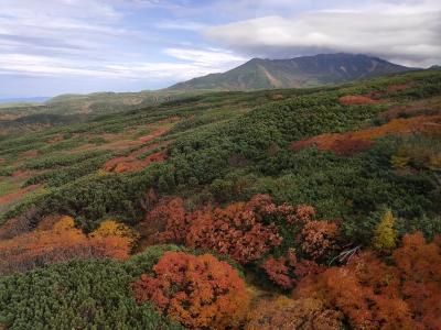 今年の紅葉は綺麗~旭岳の紅葉を見に