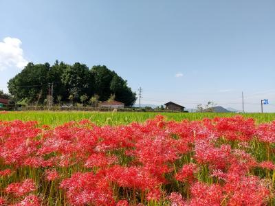 令和3年9月23日 桜井から橿原へ気ままなあるき旅