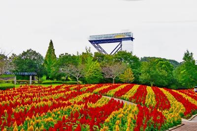花フェスタ記念公園の秋のローズウィークが始まる前に(^^)!